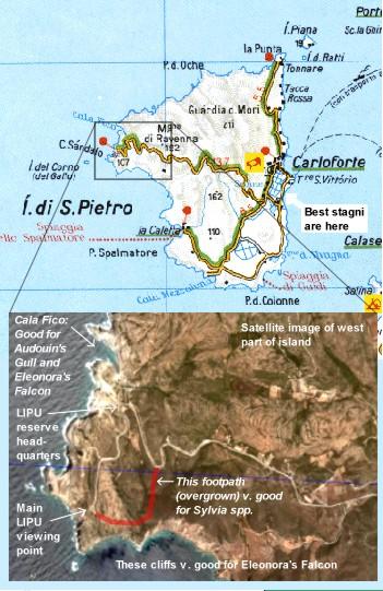 Birdwatching in sardinia isola di san pietro san pietro island isola di san pietro island map sciox Gallery